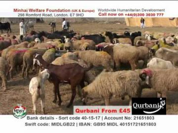 Collective Qurbani 2011 - Minhaj Welfare Foundation